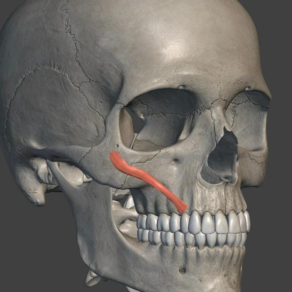 Подбор упражнений для коррекции уголков губ