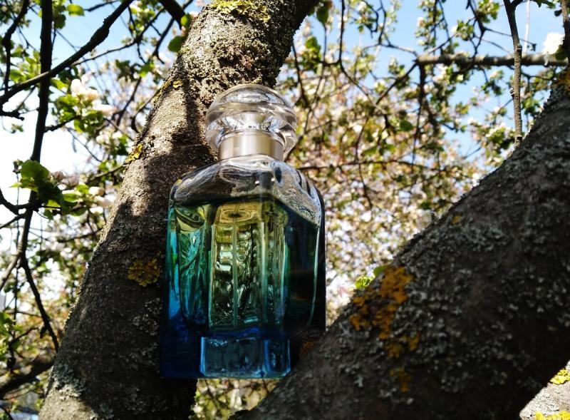 Аромат для «грозы в начале мая», или лучший парфюмерный имбирь