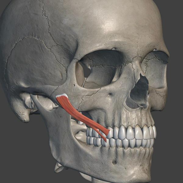 Как корректировать носогубные заломы и птоз щек