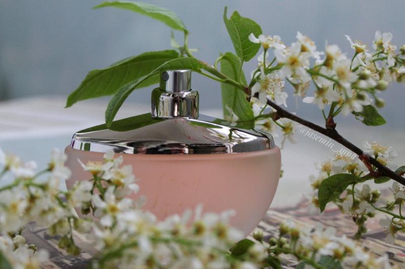 Самые притягательные весенние ароматы.