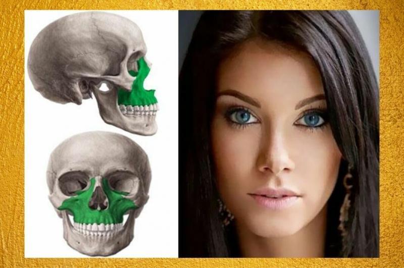 Максилла - как молодость и красота лица зависит от этой кости!