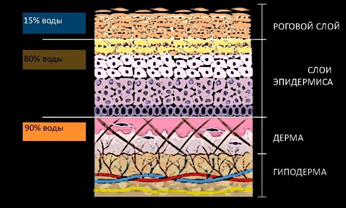 Увлажнение кожи – 3 метода в комплексе