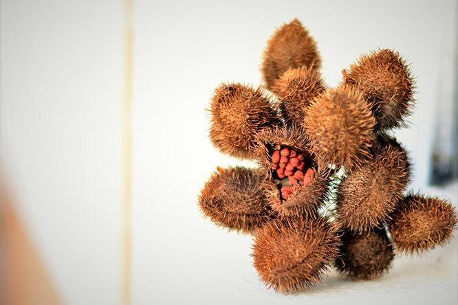 Аннато, снежные грибы, бакучиол: почему они должны быть втвоей косметике
